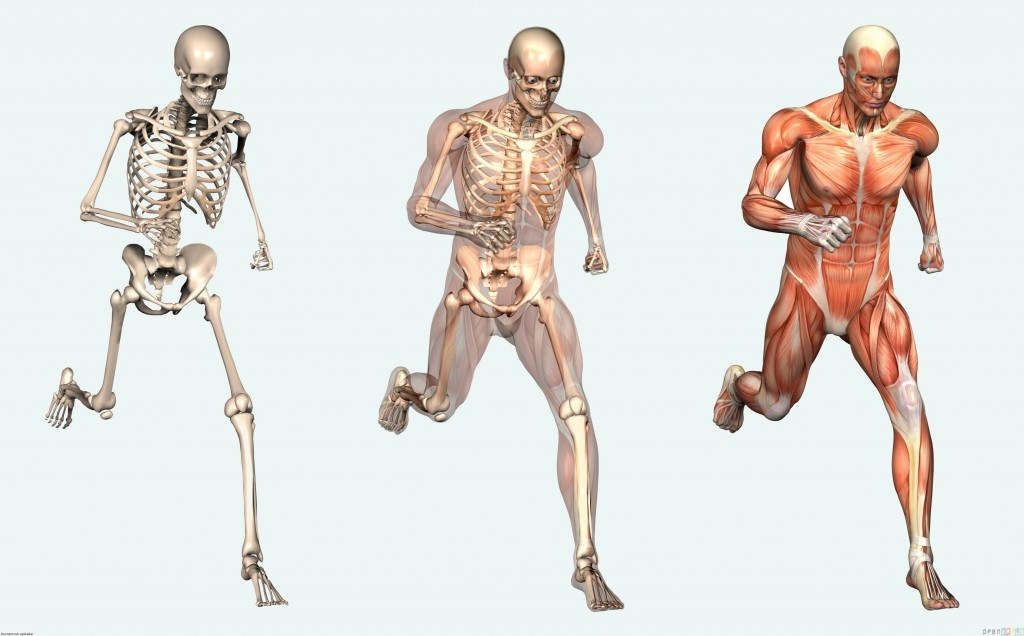 Anatomy-of-the-human-body9-1024x636